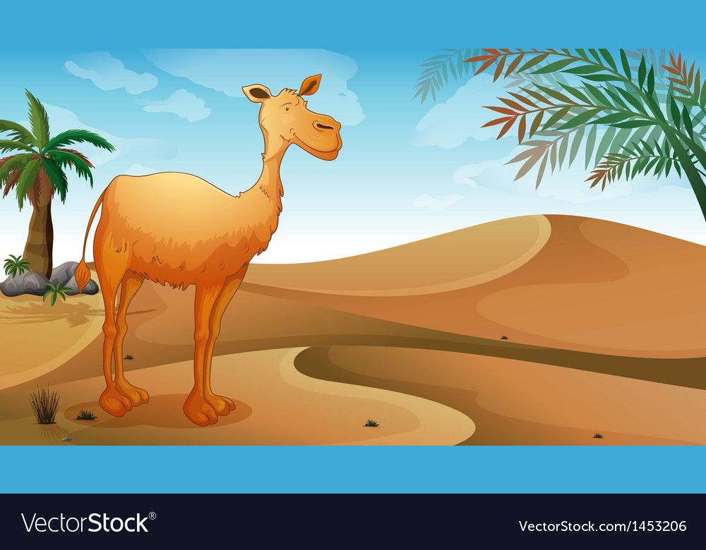 A desert with a lonely camel vector | Price: 1 Credit (USD $1)