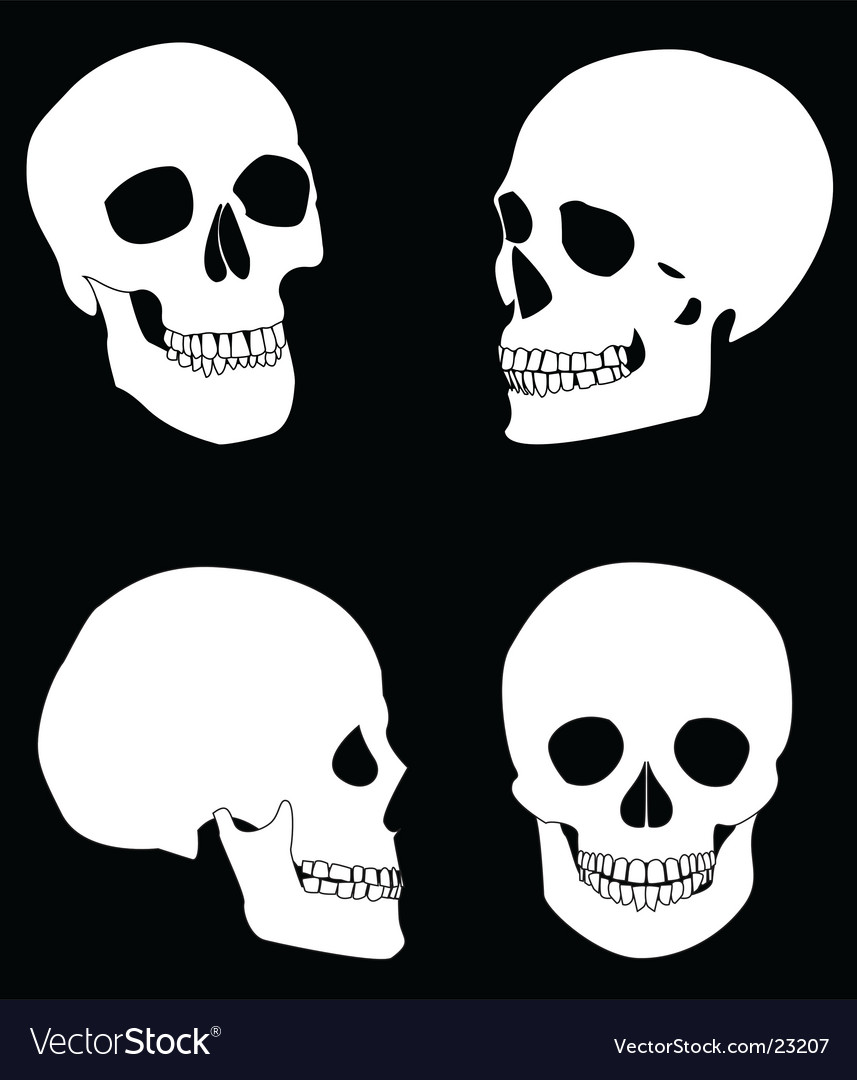 The black and white skull vector | Price: 1 Credit (USD $1)