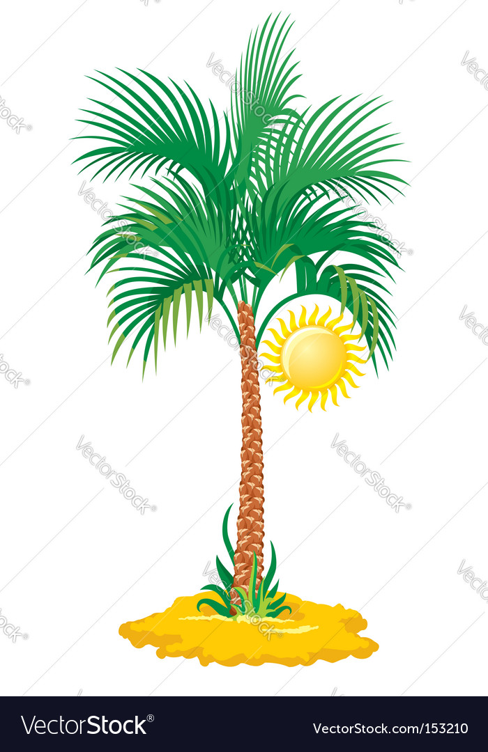 Tropical palm tree vector | Price: 1 Credit (USD $1)