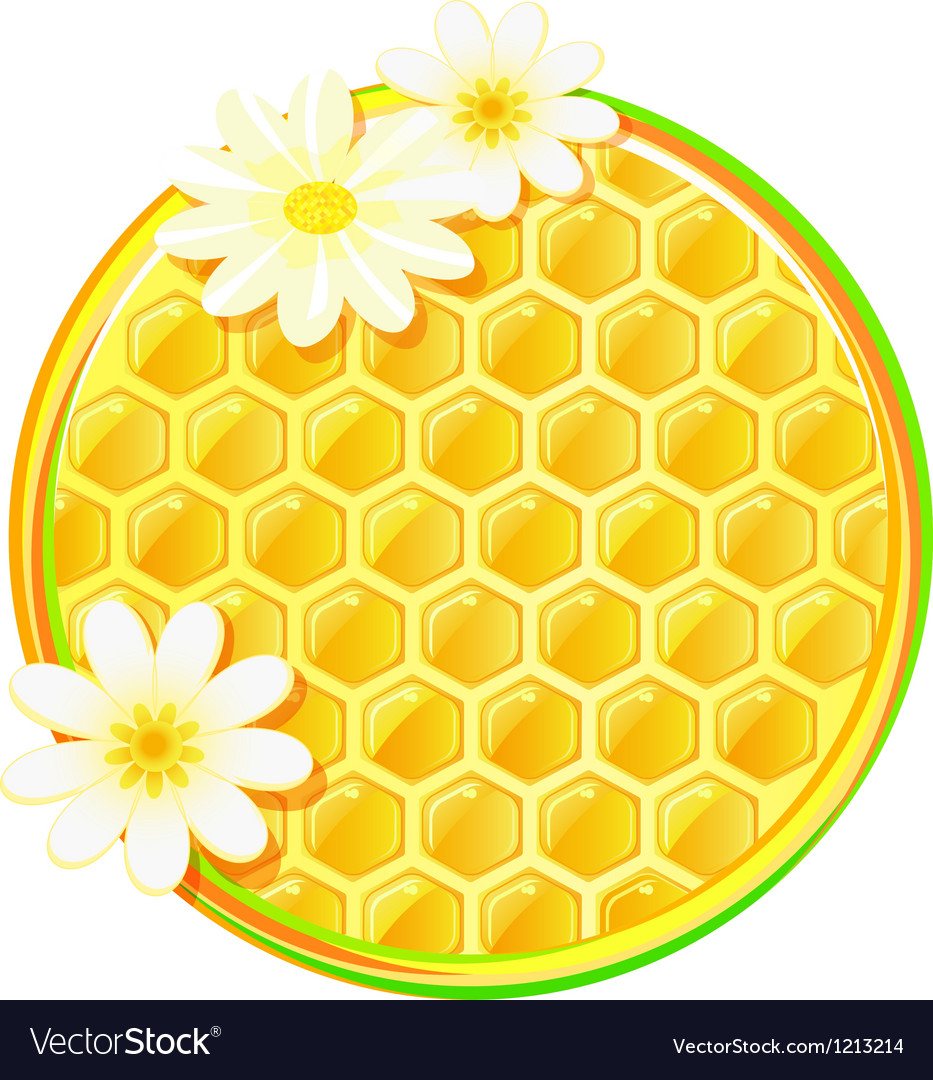 Honeycomb in circle with camomile flower vector | Price: 3 Credit (USD $3)