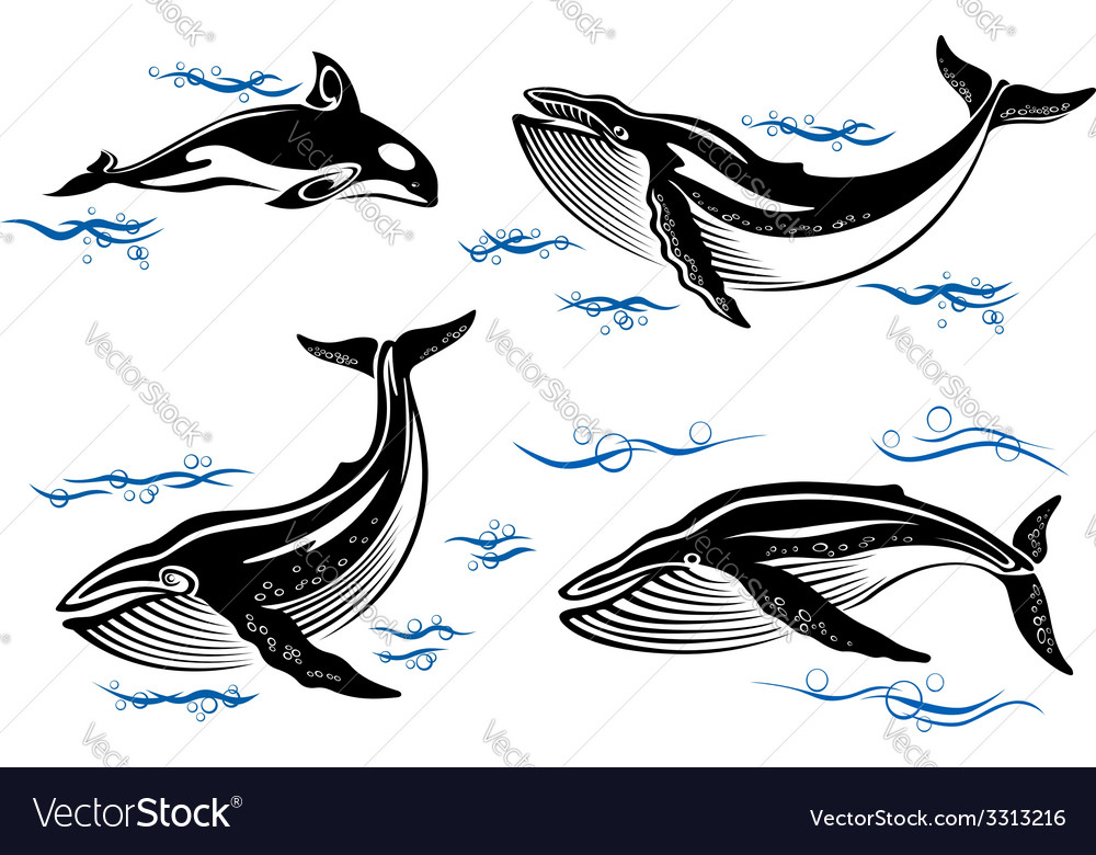 Cartoon sea whales vector