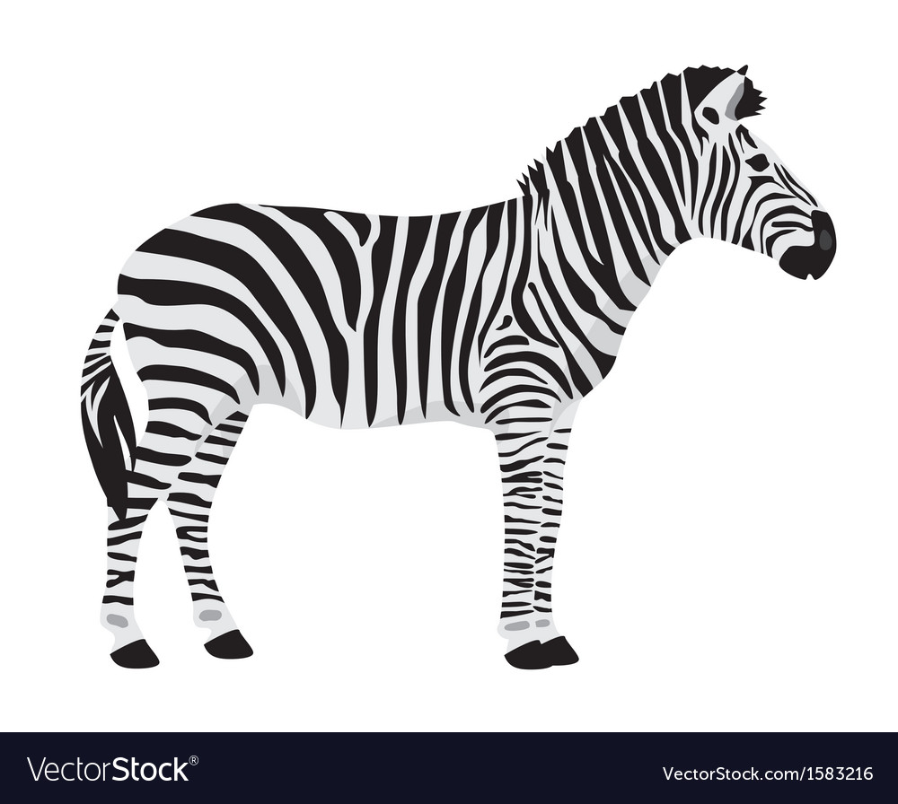 Zebra vector | Price: 1 Credit (USD $1)