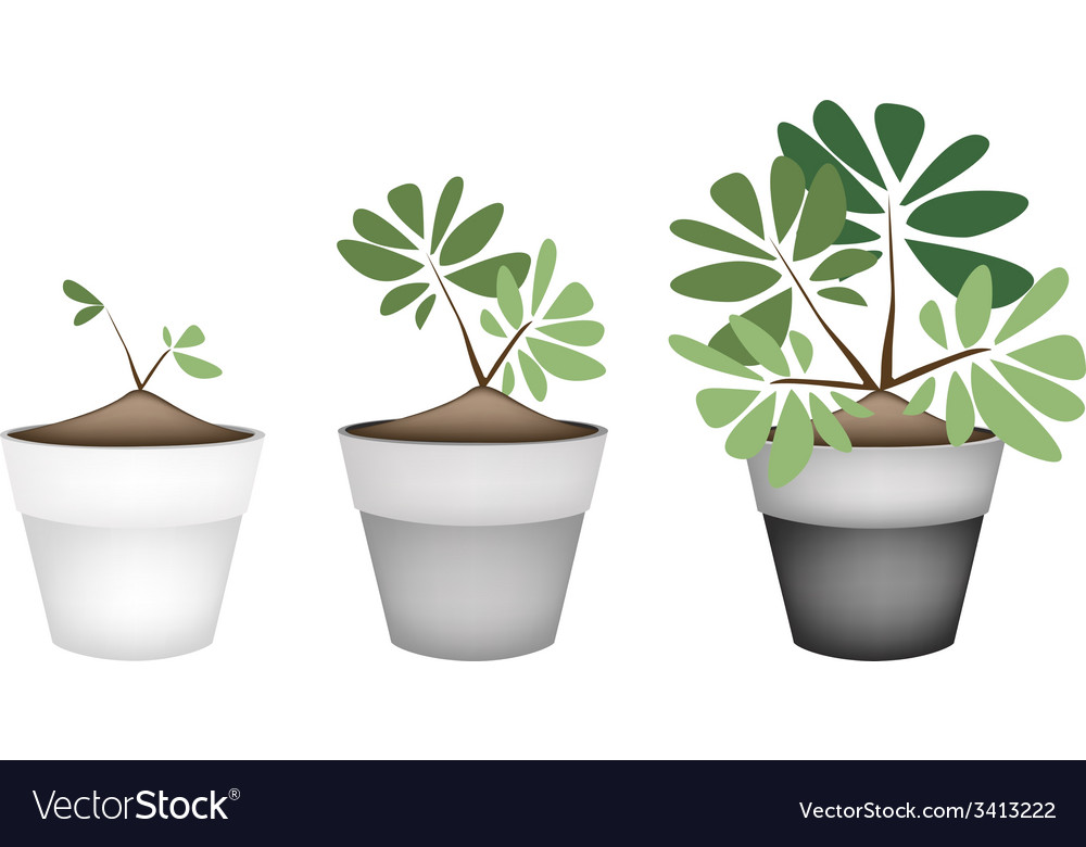 Green trees and plants in ceramic flower pots vector | Price: 1 Credit (USD $1)