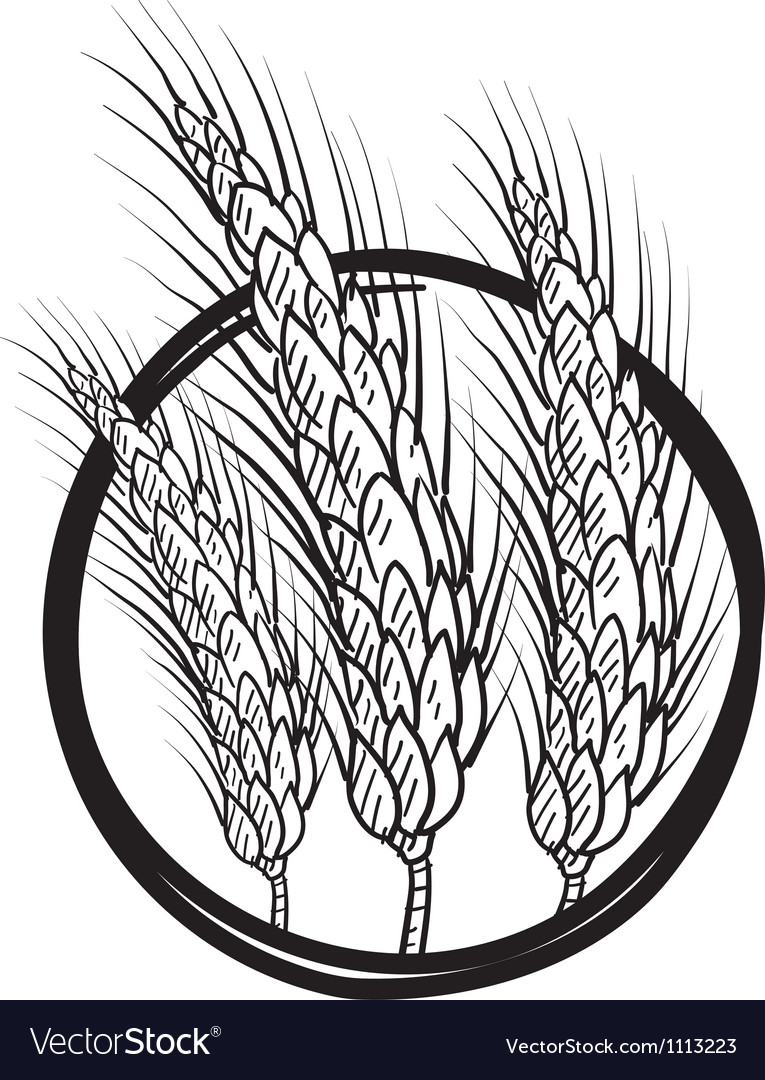 Doodle wheat grain vector | Price: 1 Credit (USD $1)