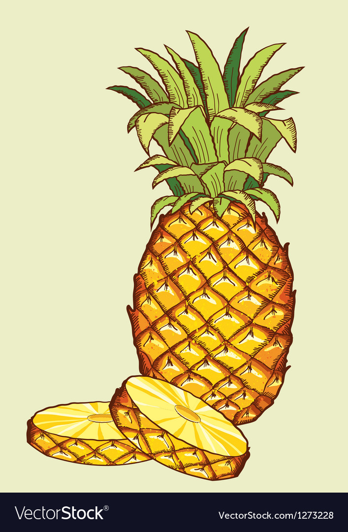 Pineapple fruit vector | Price: 3 Credit (USD $3)