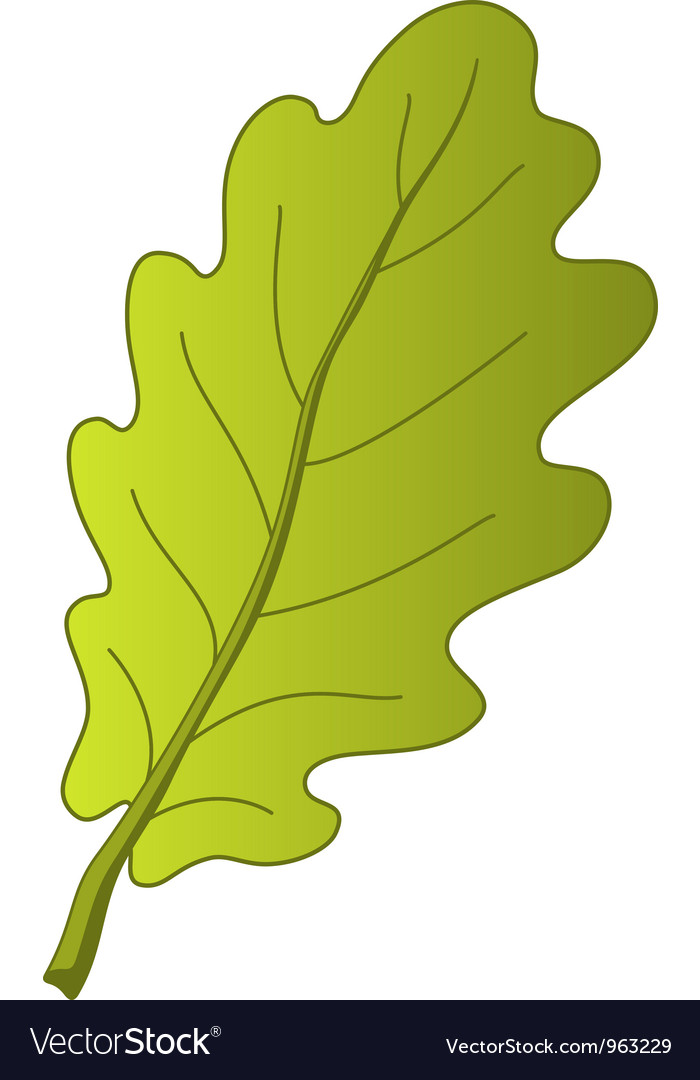 Leaf of oak tree vector | Price: 1 Credit (USD $1)