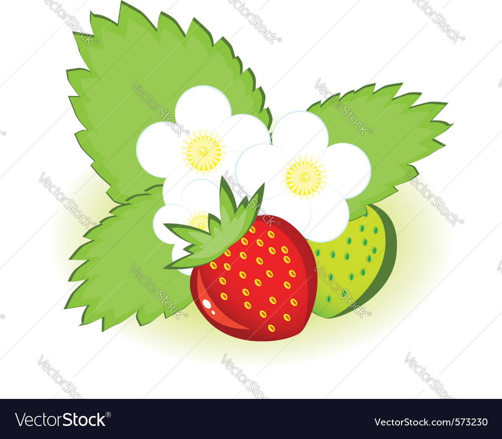 Ripe strawberries vector | Price: 1 Credit (USD $1)