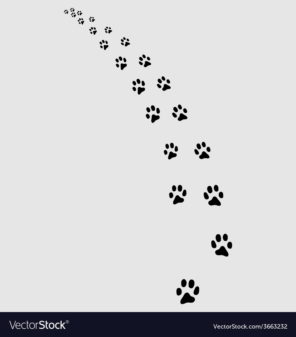 Trail of cat 2 vector | Price: 1 Credit (USD $1)