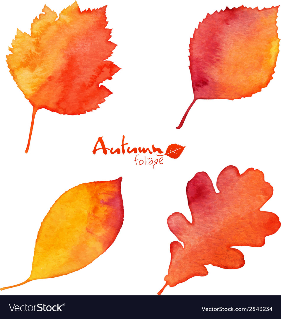Autumn orange watercolor painted foliage set vector   Price: 1 Credit (USD $1)