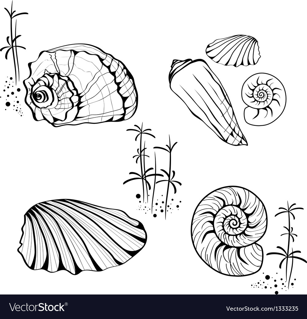 Sea shell and snail collection vector | Price: 1 Credit (USD $1)