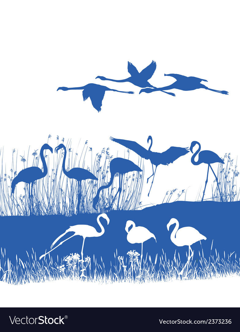 Flamingos on the shore vector | Price: 1 Credit (USD $1)