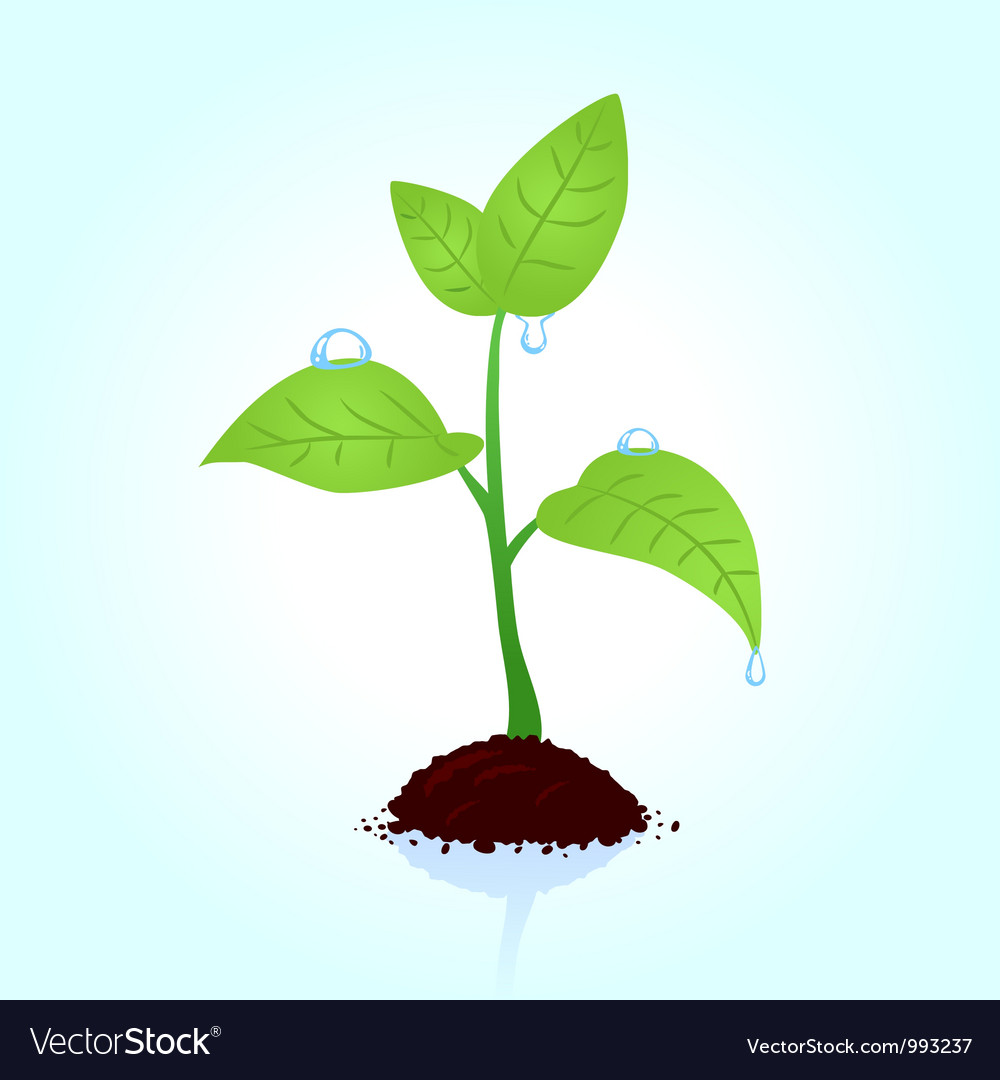 Seedling vector | Price: 1 Credit (USD $1)