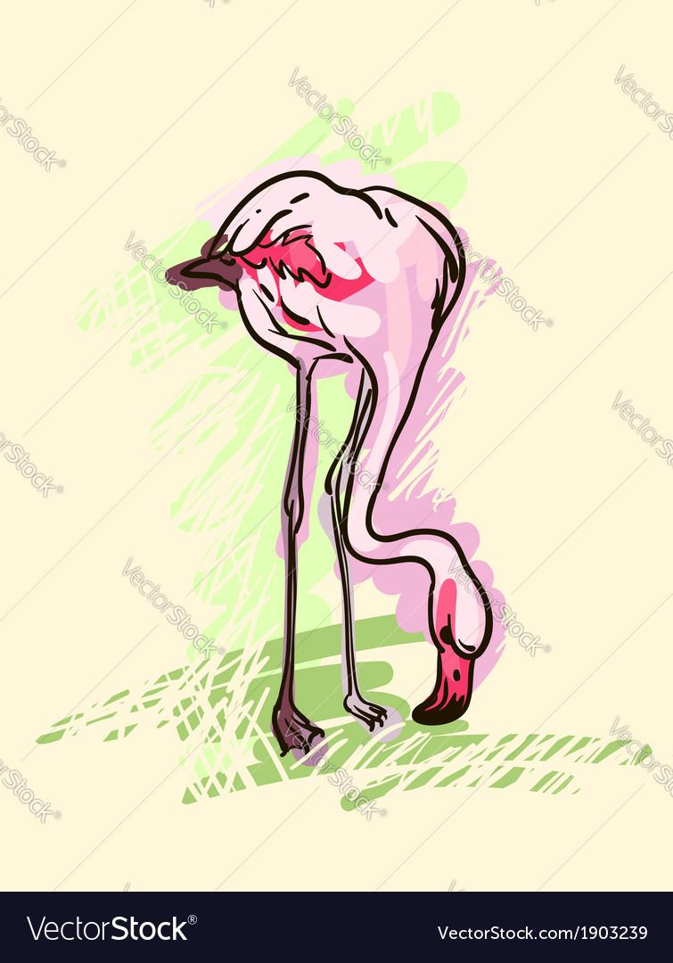 Flamingo sketch vector | Price: 1 Credit (USD $1)