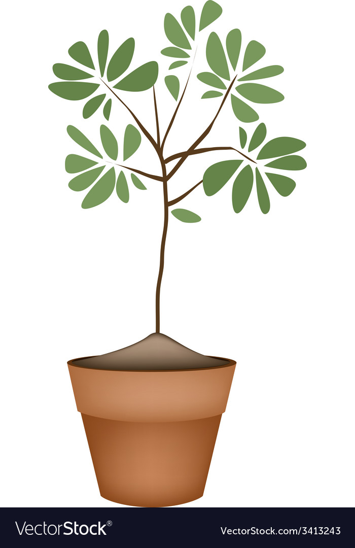 Beautiful green tree in ceramic flower pots vector | Price: 1 Credit (USD $1)