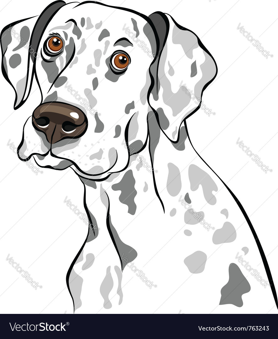 Dog dalmatian breed vector | Price: 1 Credit (USD $1)