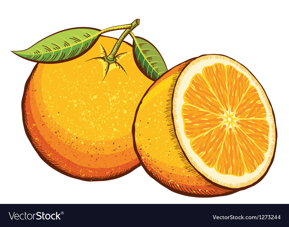 Orange fruits isolated vector | Price: 3 Credit (USD $3)