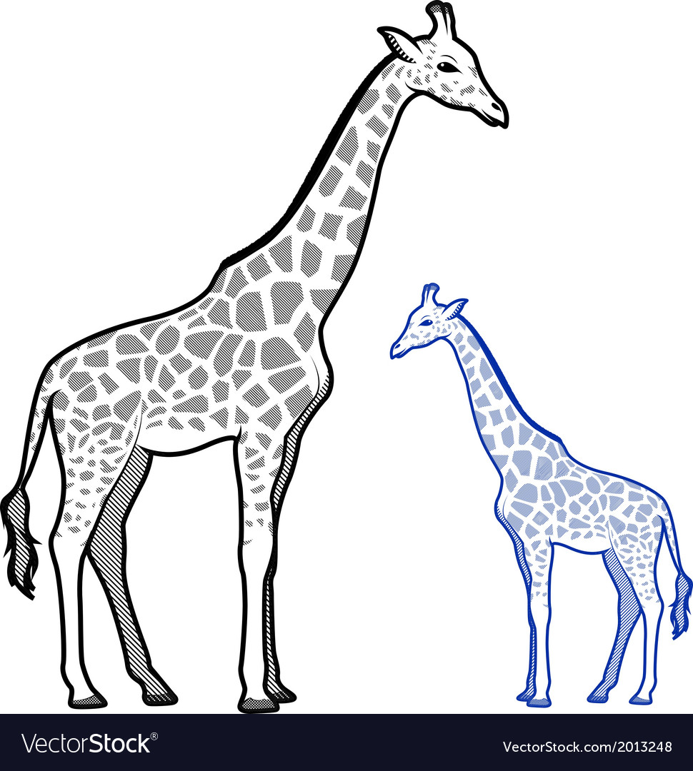 Giraffe line art vector | Price: 1 Credit (USD $1)
