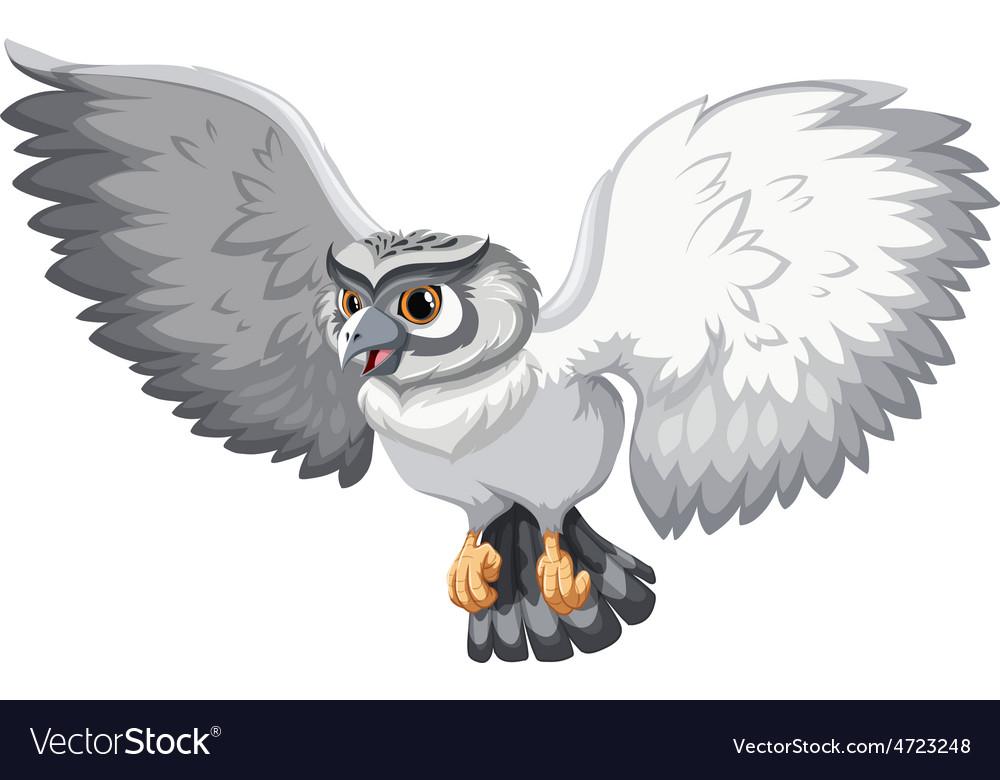 Grey owl vector   Price: 1 Credit (USD $1)
