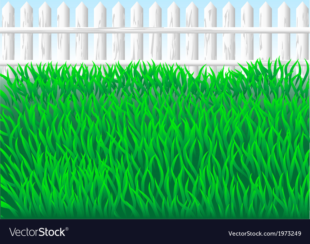 Garden grass vector | Price: 1 Credit (USD $1)