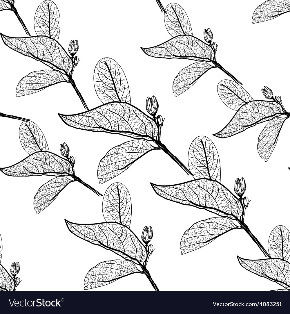 Leaves contours on white background floral vector | Price: 1 Credit (USD $1)