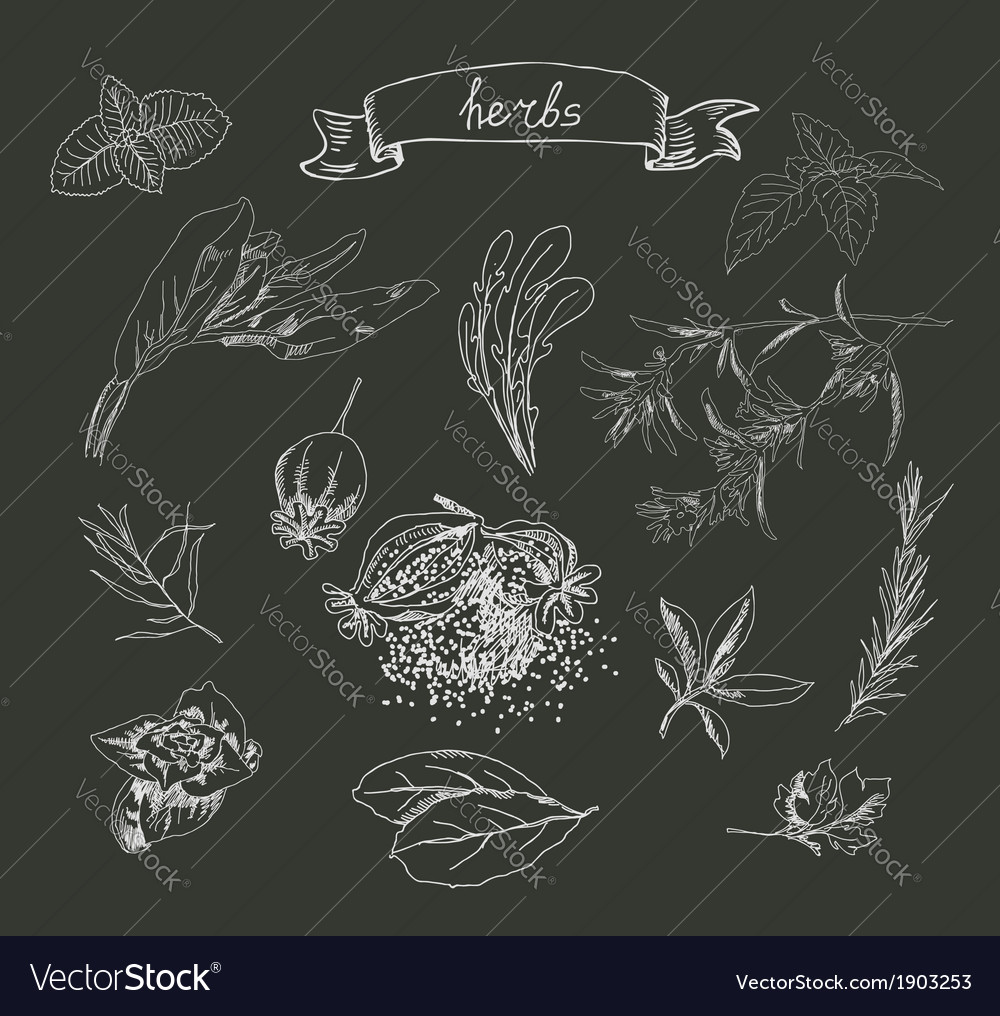 Set of herb sketches vector | Price: 1 Credit (USD $1)