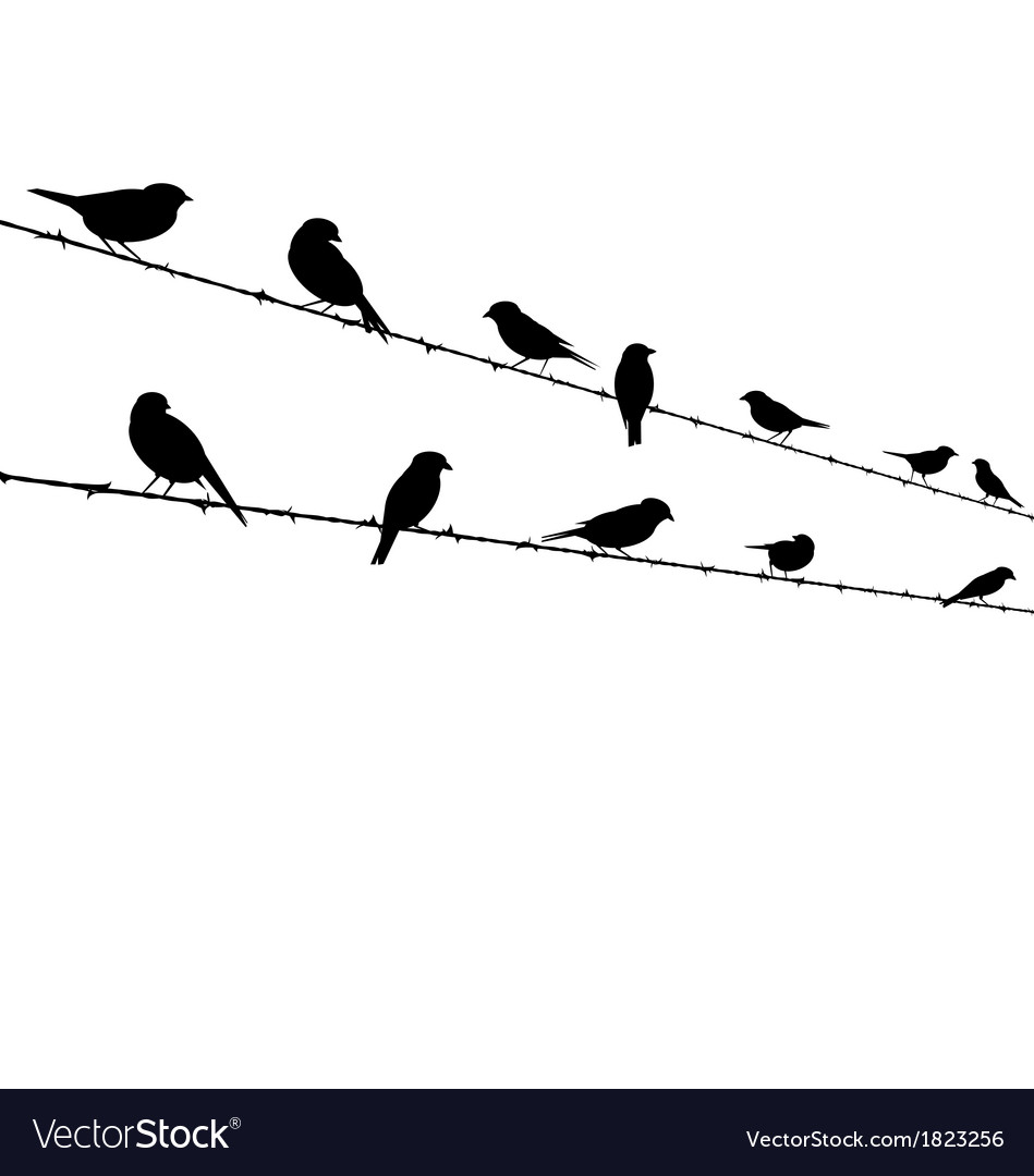 Birds on barb wire - freedom concept vector | Price: 1 Credit (USD $1)