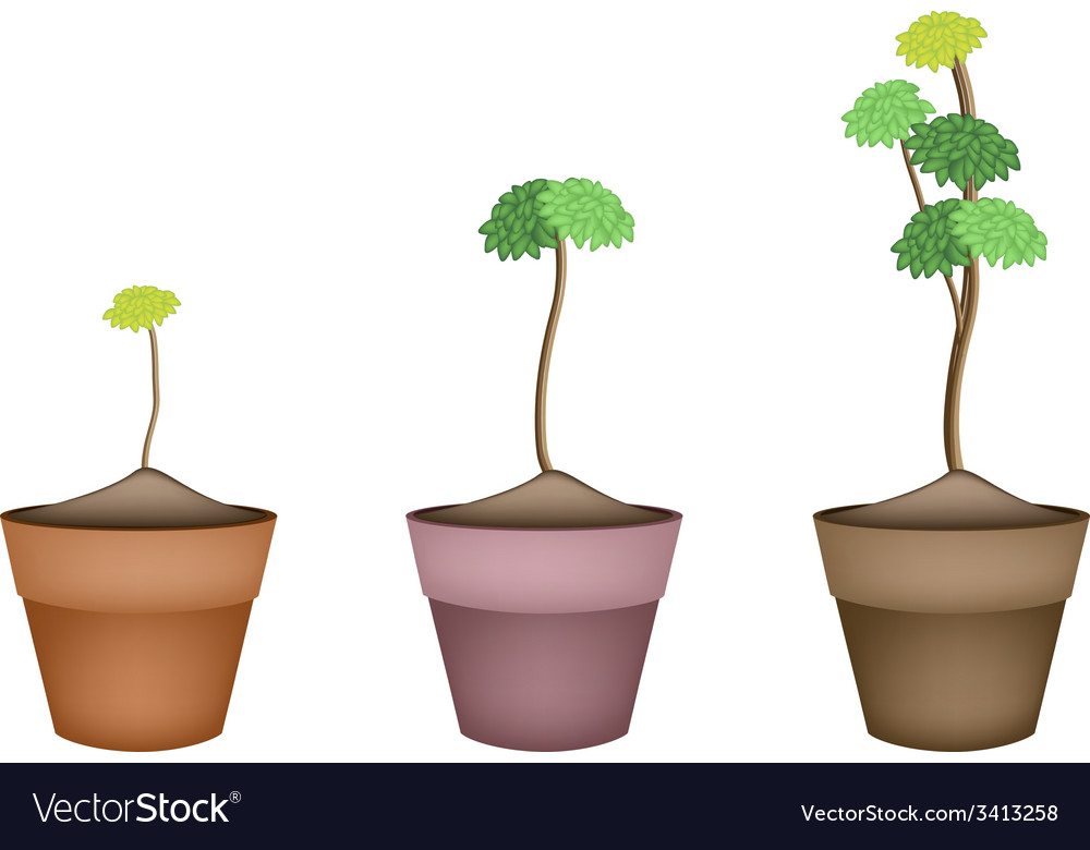 Yucca tree and dracaena plant in ceramic flower po vector | Price: 1 Credit (USD $1)