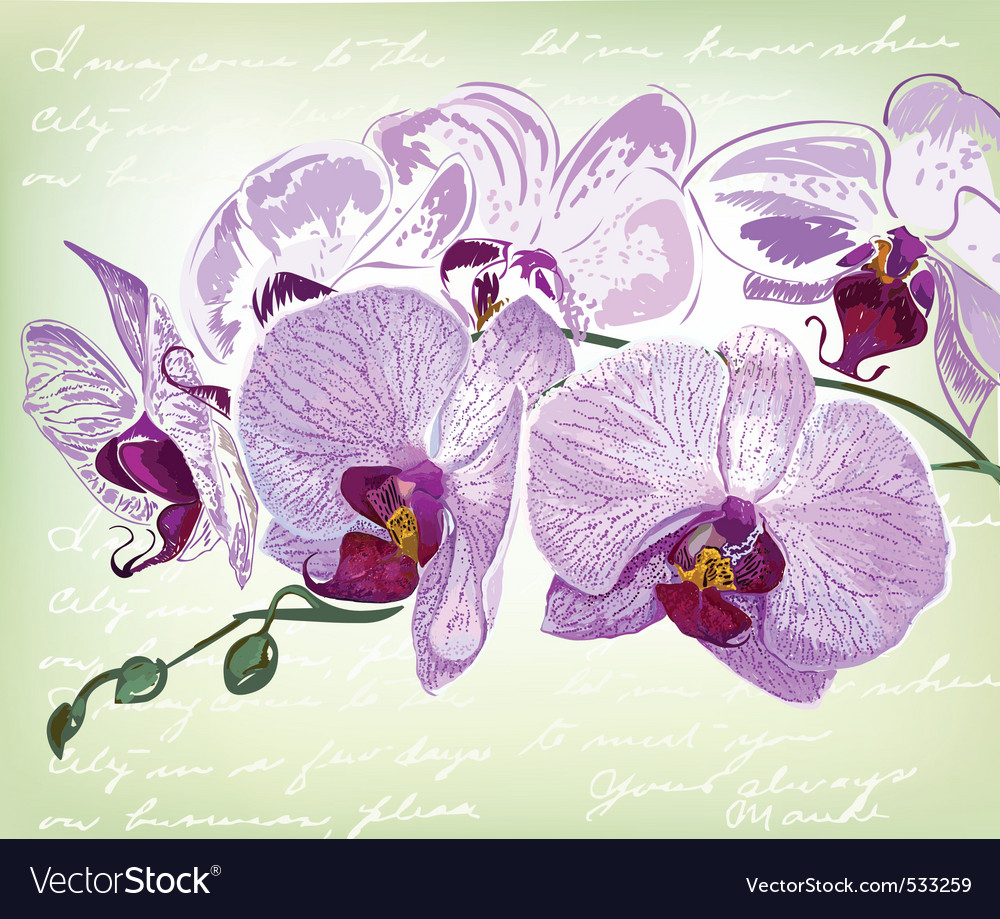 Beautiful orchid flower vector | Price: 3 Credit (USD $3)