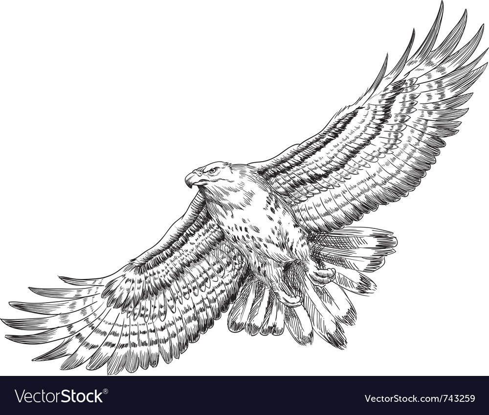 Hand drawn hawk vector | Price: 1 Credit (USD $1)