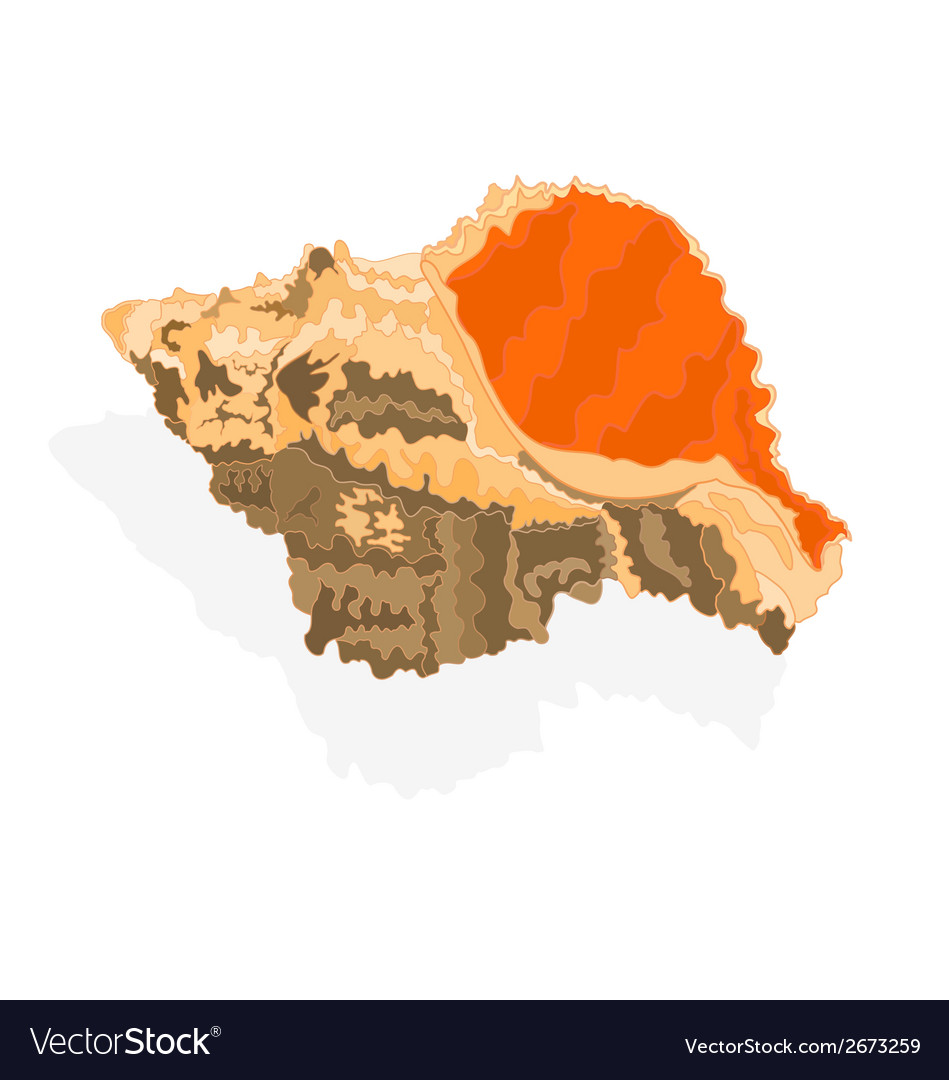 Seashell marine life vector | Price: 1 Credit (USD $1)
