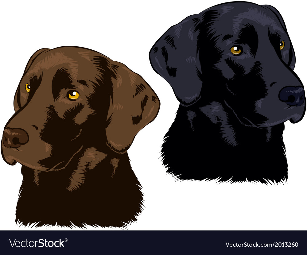 Labrador vector | Price: 3 Credit (USD $3)