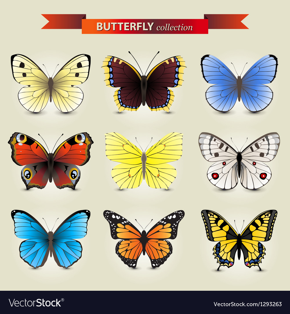 Butterfly new vector | Price: 3 Credit (USD $3)
