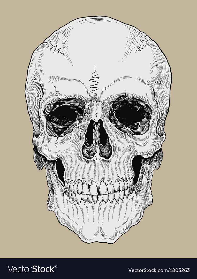Realistic cross hatched inked human skull vector | Price: 1 Credit (USD $1)
