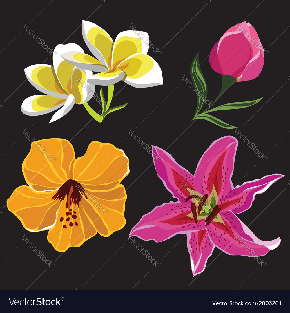 Set of realistic flowers isolated on black vector | Price: 1 Credit (USD $1)