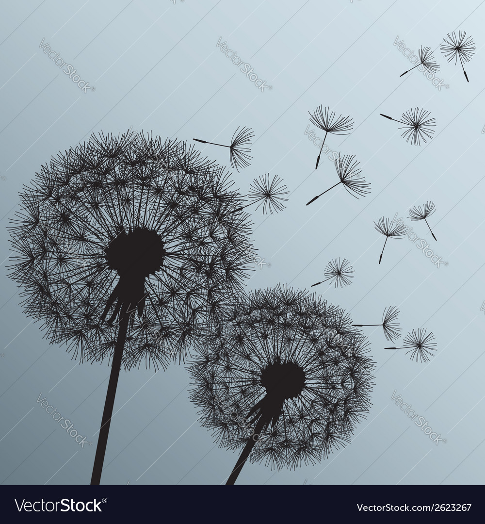 Flowers dandelions silhouette on grey background vector | Price: 1 Credit (USD $1)