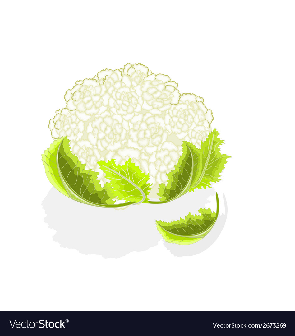 Cauliflower with leaves vector | Price: 1 Credit (USD $1)