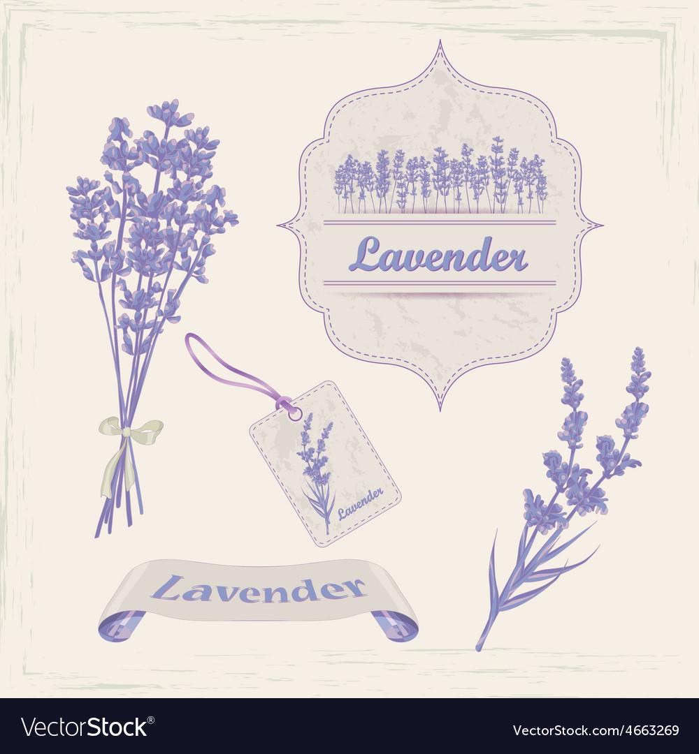 Lavender vector | Price: 1 Credit (USD $1)