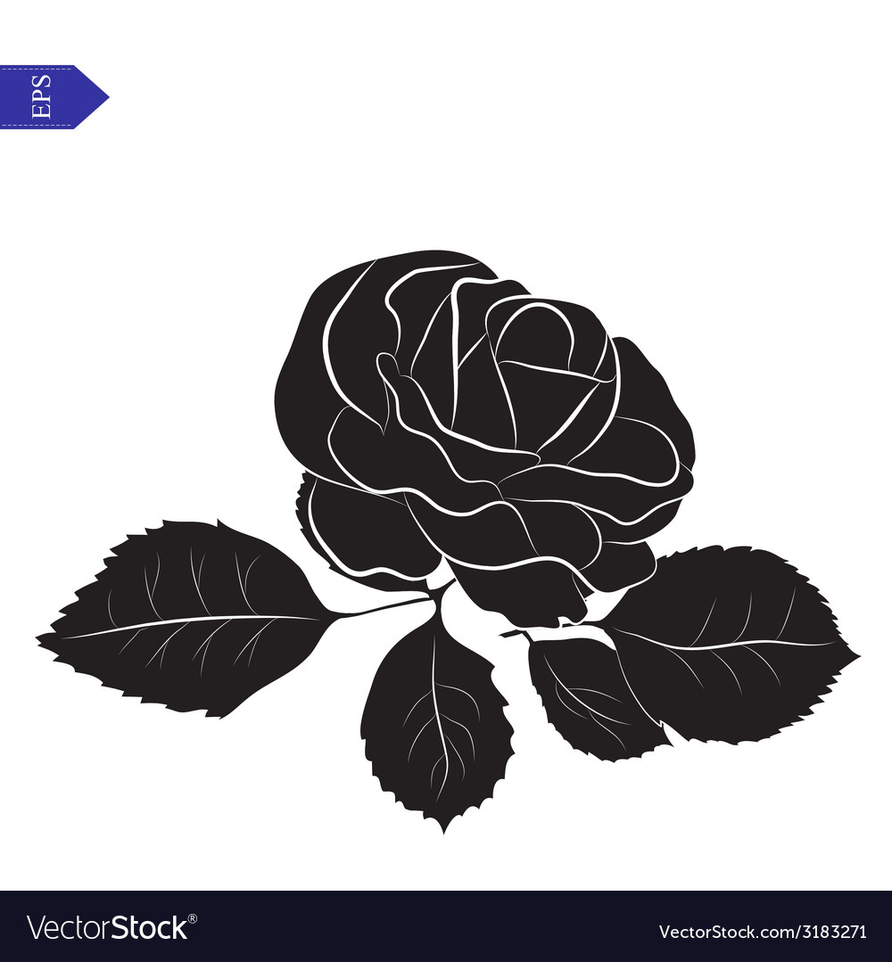Flower and leaves of roses in black and white vector | Price: 1 Credit (USD $1)