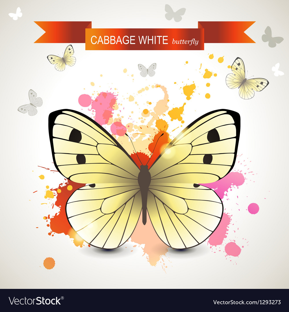 Cabbage white butterfly vector | Price: 1 Credit (USD $1)
