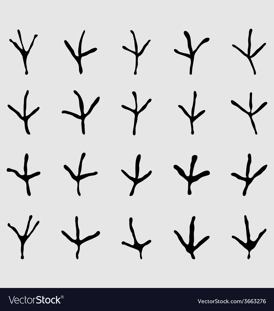 Traces of birds vector | Price: 1 Credit (USD $1)