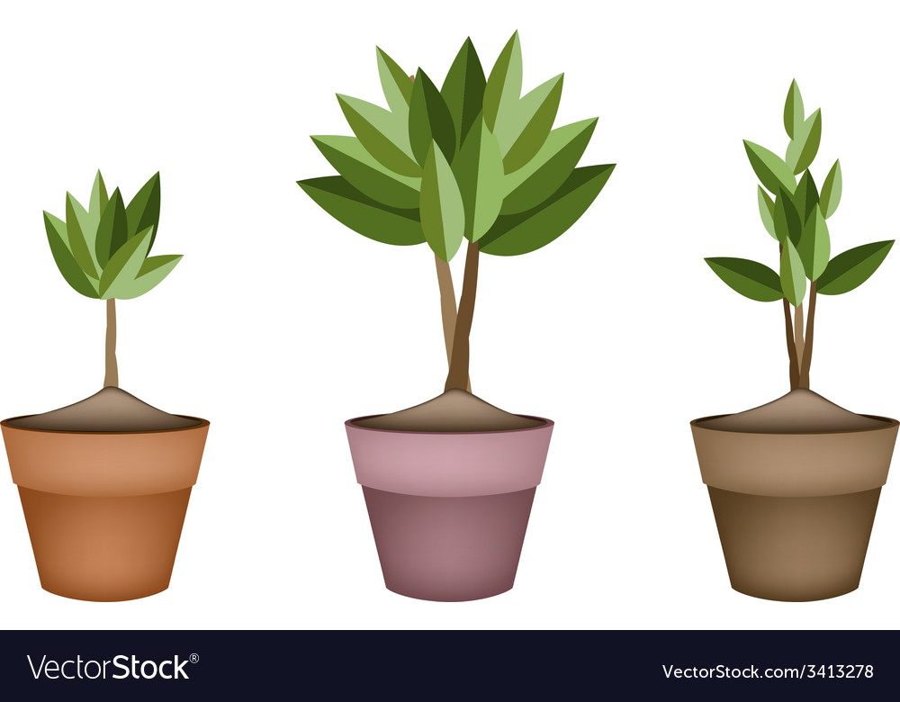 Evergreen trees and plants in ceramic flower pots vector | Price: 1 Credit (USD $1)