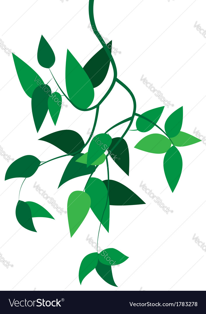 Green branch with leaves vector | Price: 1 Credit (USD $1)