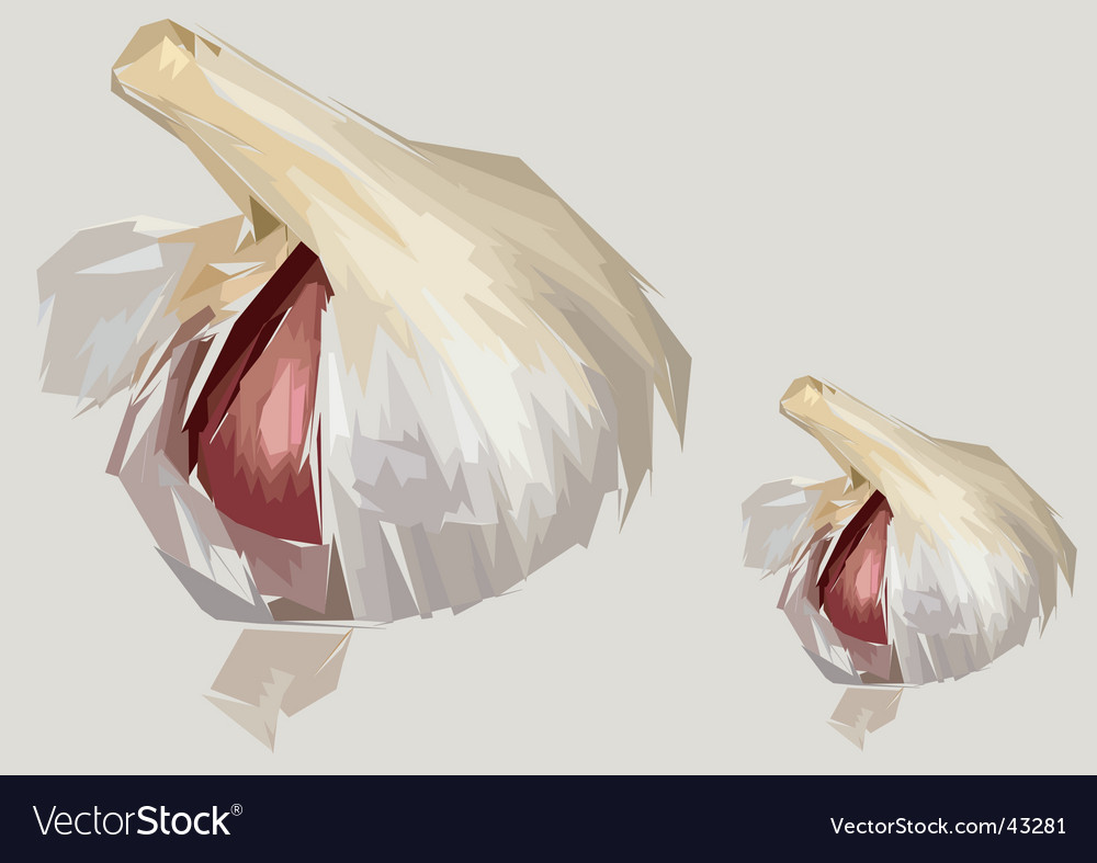 Garlic clove artistic render vector | Price: 1 Credit (USD $1)