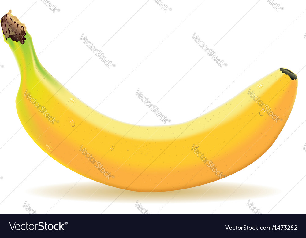 One banana isolated on white vector | Price: 1 Credit (USD $1)