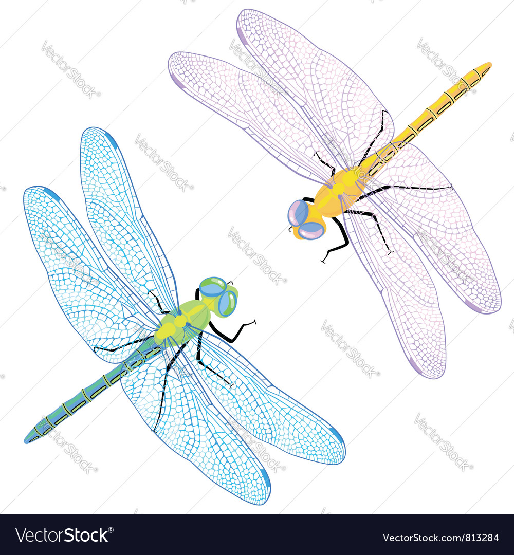 Dragonflies vector | Price: 3 Credit (USD $3)