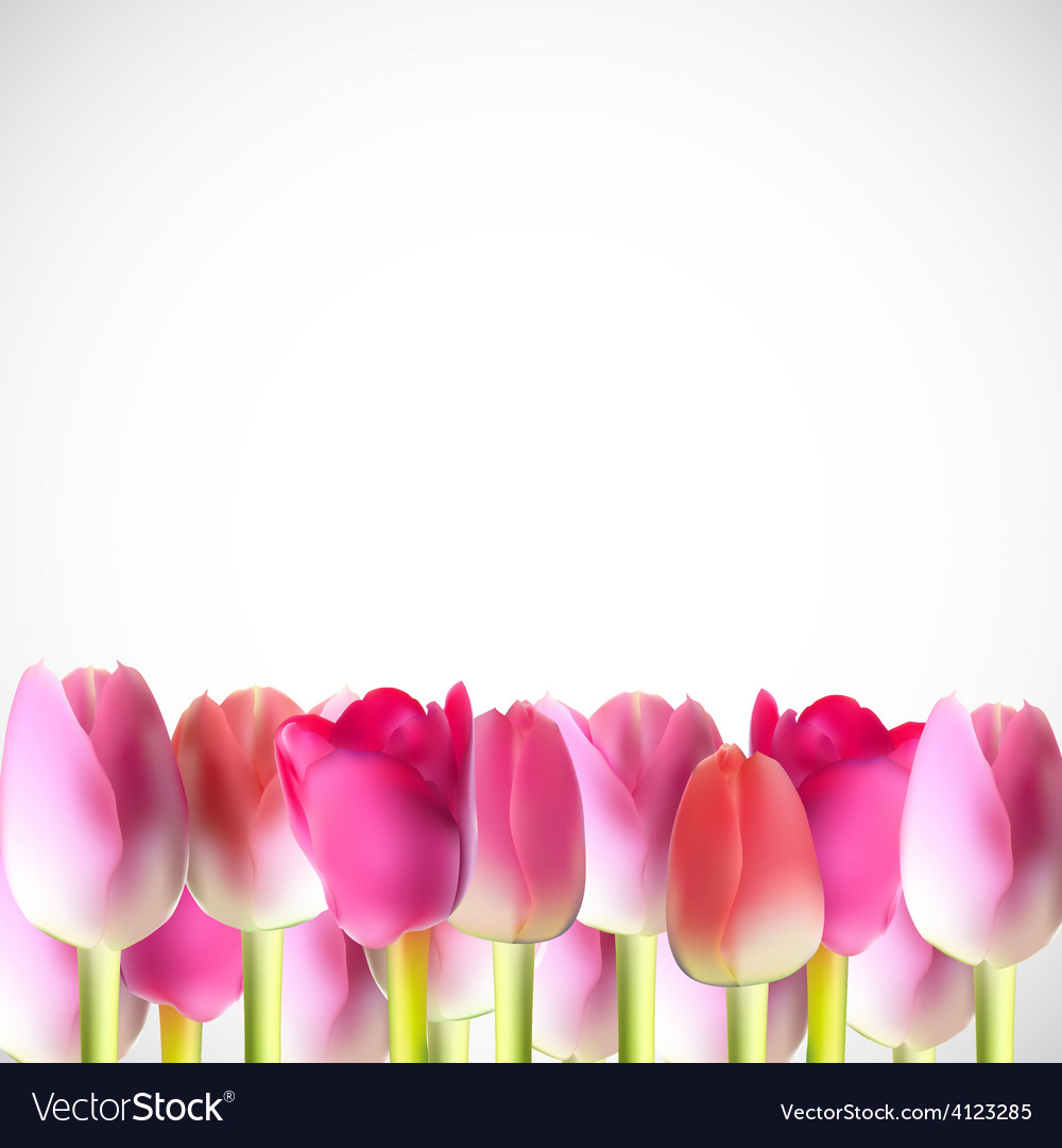 Beautiful pink realistic tulip vector | Price: 1 Credit (USD $1)