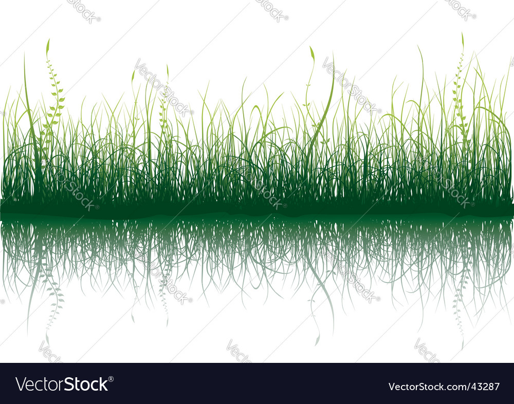 Green grass isolated on white vector | Price: 1 Credit (USD $1)