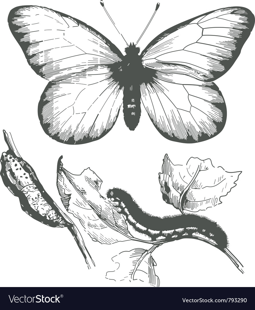 Butterfly ink drawing vector | Price: 1 Credit (USD $1)