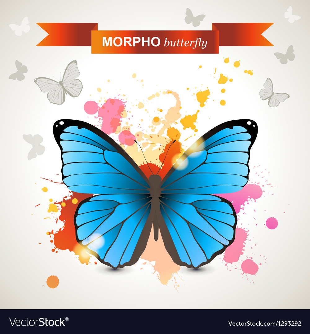 Morpho butterfly vector | Price: 1 Credit (USD $1)