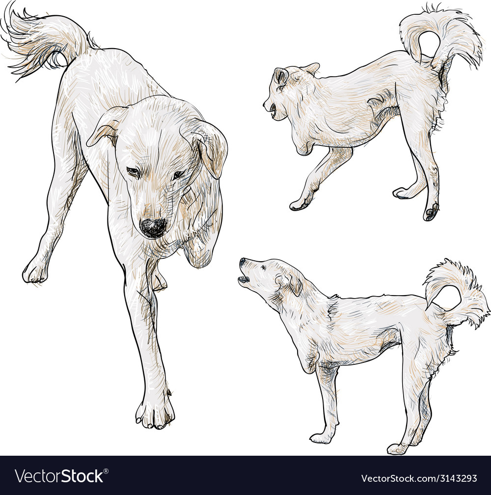 Handicapped dog vector   Price: 1 Credit (USD $1)
